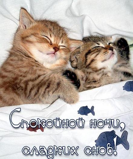 Открытка, спокойной ночи, сладких снов, котята, милые котята, открытка для друзей, милая открытка, скачать бесплатно, открытку... спокойной ночи. скачать открытку бесплатно | 123ot