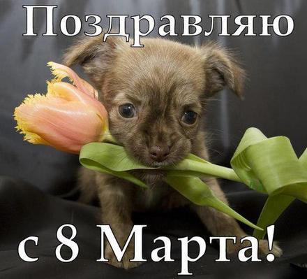 Открытка, картинка, 8 марта, открытка на 8 марта, открытка с 8 марта, щенок. Открытки  Открытка, картинка, 8 марта, открытка на 8 марта, открытка с 8 марта, поздравление на 8 марта, поздравление с 8 марта, картинка 8 марта, картинка с 8 марта, международный женский день скачать бесплатно онлайн скачать открытку бесплатно   123ot