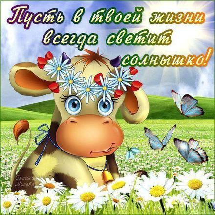 Открытка хорошего настроения, улыбайся, корова в поле, ромашки, пожелание отличного настроения! скачать открытку бесплатно | 123ot