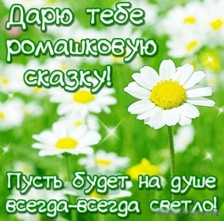 Открытка хорошего настроения, лето, ромашки, поле ромашек, ромашковые поля, улыбайся, пожелание отличного настроения! скачать открытку бесплатно | 123ot
