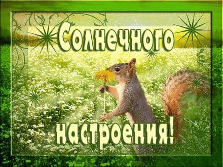 Солнечная летняя открытка хорошего настроения, белка, поле, улыбайся, пожелание отличного настроения! скачать открытку бесплатно | 123ot