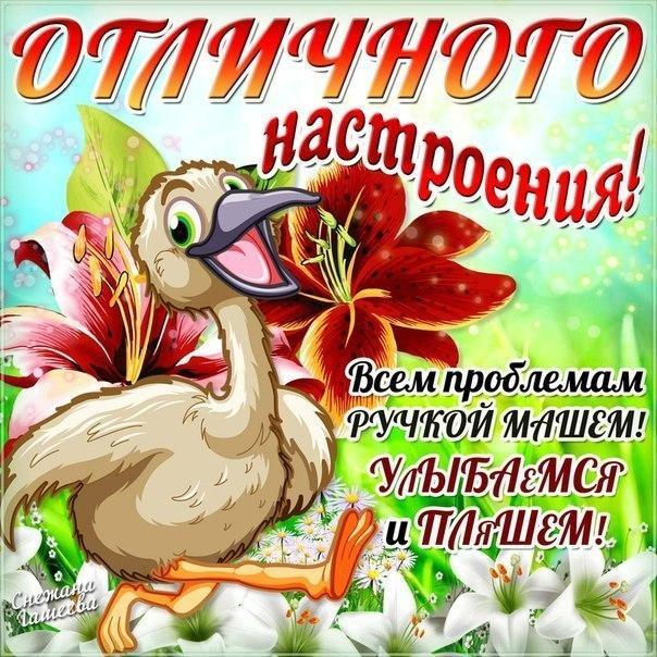 Веселая, открытки с пожеланиями хорошего дня и настроения прикольные