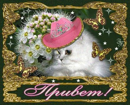 Открытка привет, приветик! Картинка привет, приветик! Золотая открытка привет с котом. Богатый кот. Цветы. скачать открытку бесплатно | 123ot
