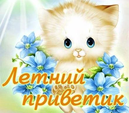 Открытка привет, приветик! Картинка привет, приветик! Открытка летний приветик, котик, котенок, цветы. Солнце. скачать открытку бесплатно | 123ot