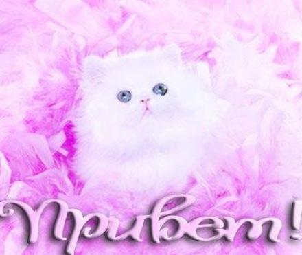 Открытка привет, приветик! Картинка привет, приветик! Открытка привет с котиком! Для девочек. скачать открытку бесплатно | 123ot