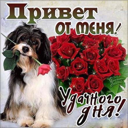 Открытка привет, приветик! Открытка привет с собакой и розами! Открытка привет с милой собачкой! Открытка привет с букетом роз! Картинка привет, приветик! скачать открытку бесплатно | 123ot