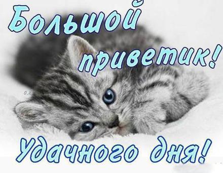 Открытка привет, приветик! Картинка привет, приветик! Открытка привет с котиком! скачать открытку бесплатно | 123ot