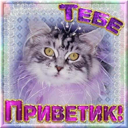 Открытка привет, приветик! Открытка приветик с красивым котом! Открытка приветик с красивой кошкой! Открытка привет! Картинка привет, приветик! скачать открытку бесплатно | 123ot