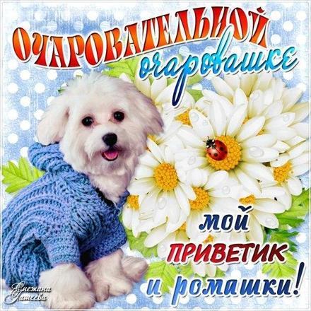 Открытка привет, приветик! Картинка привет, приветик! Открытка привет для девушки с собачкой! скачать открытку бесплатно | 123ot
