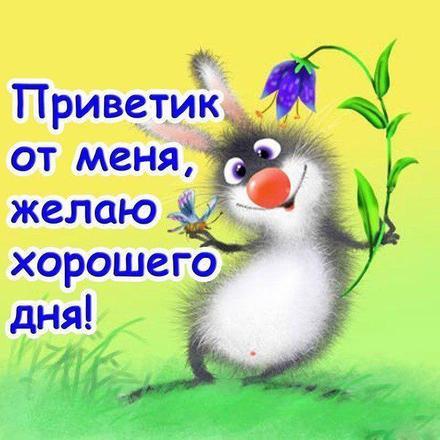Открытка привет, приветик! Прикольный заяц! Зайка! Зайчик! Заинька! Картинка привет, приветик! скачать открытку бесплатно | 123ot