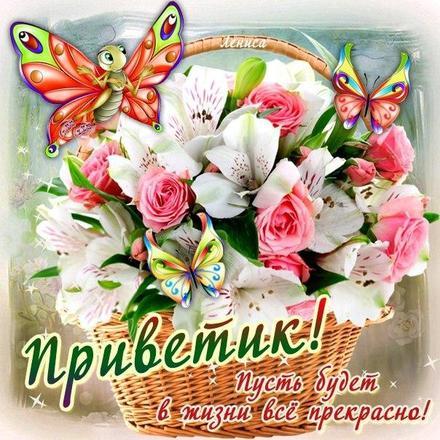 Открытка привет, приветик! Картинка привет, приветик! Открытка с цветами в корзине! Открытка с бабочками и цветами! скачать открытку бесплатно | 123ot