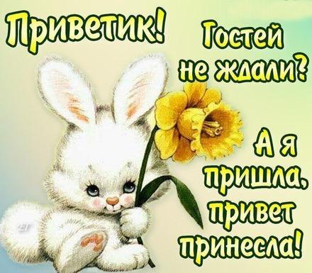 Открытка привет, приветик! Картинка привет, приветик! Белый зайка! Желтый цветок! Стишок! скачать открытку бесплатно | 123ot