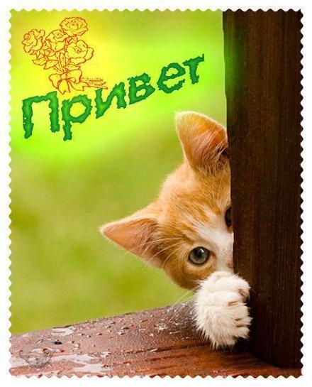 Открытка привет, приветик! Картинка привет, приветик! Открытка привет с котиком. Кот. Лес. скачать открытку бесплатно | 123ot