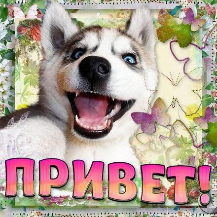 Открытка привет, приветик! Картинка привет, приветик! Открытка привет с собакой. скачать открытку бесплатно | 123ot