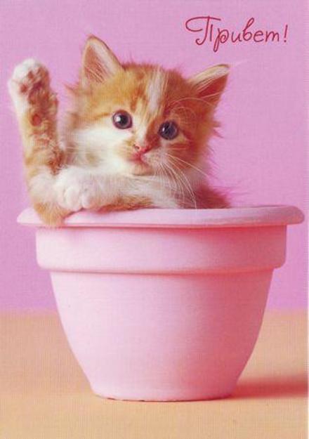 Нежная открытка привет, приветик с милым котиком! Открытка привет с котом! Картинка привет, приветик! скачать открытку бесплатно | 123ot