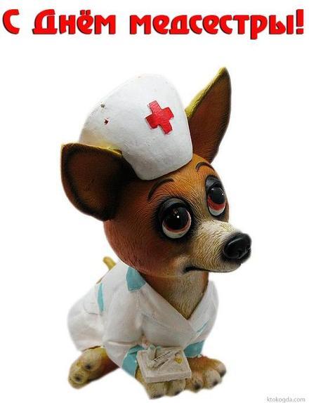 Открытка, картинка, День медсестры, 12 мая, медсестра, Международный день медицинской сестры, поздравление, собака. Открытки  Открытка, картинка, День медсестры, 12 мая, медсестра, Международный день медицинской сестры, поздравление, собака, красный крест скачать бесплатно онлайн скачать открытку бесплатно | 123ot