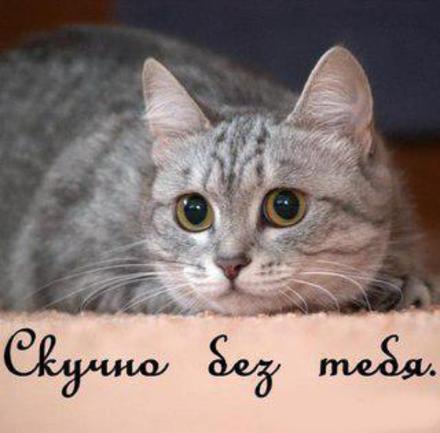 Открытка скучаю, я скучаю по тебе, кот, котик, картинка скучаю, жду тебя, мне грустно без тебя, очень скучаю без тебя. скачать открытку бесплатно | 123ot