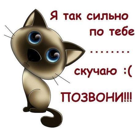 Открытка скучаю, позвони, кот, котенок Гав, я скучаю по тебе, картинка скучаю, жду тебя, мне грустно без тебя, очень скучаю без тебя. скачать открытку бесплатно | 123ot