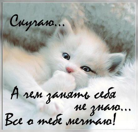 Открытка скучаю, белая кошечка, котенок, я скучаю по тебе, картинка скучаю, жду тебя, мне грустно без тебя, очень скучаю без тебя. скачать открытку бесплатно | 123ot