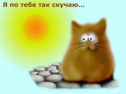 Прикольная открытка скучаю, классный кот, я скучаю по тебе, картинка скучаю, жду тебя, мне грустно без тебя, очень скучаю без тебя. скачать открытку бесплатно | 123ot