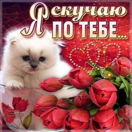 Открытка скучаю, я скучаю по тебе, красные тюльпаны, белый кот, картинка скучаю, жду тебя, мне грустно без тебя, очень скучаю без тебя. скачать открытку бесплатно | 123ot