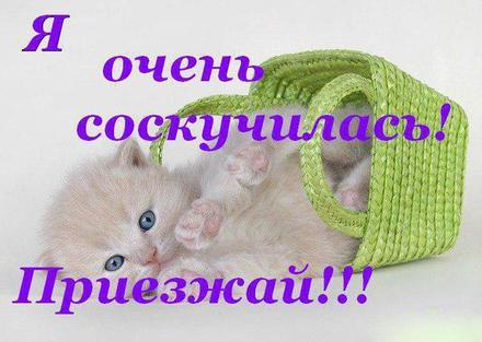 Открытка скучаю, я скучаю по тебе, котенок, картинка скучаю, жду тебя, мне грустно без тебя, очень скучаю без тебя. скачать открытку бесплатно | 123ot
