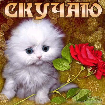 Открытка скучаю, белый котенок, роза, я скучаю по тебе, картинка скучаю, жду тебя, мне грустно без тебя, очень скучаю без тебя. скачать открытку бесплатно | 123ot