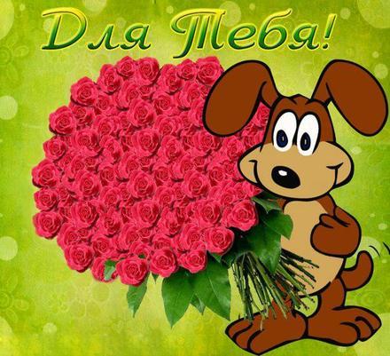 Прикольная открытка для Тебя, букет роз и собачка, картинка Тебе, просто так, от всей души, для Тебя! скачать открытку бесплатно | 123ot