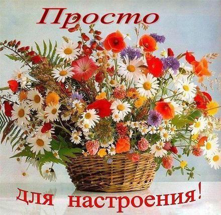 Открытка для Тебя, картинка Тебе, ассорти полевых цветов, просто так, от всей души, для Тебя! скачать открытку бесплатно | 123ot