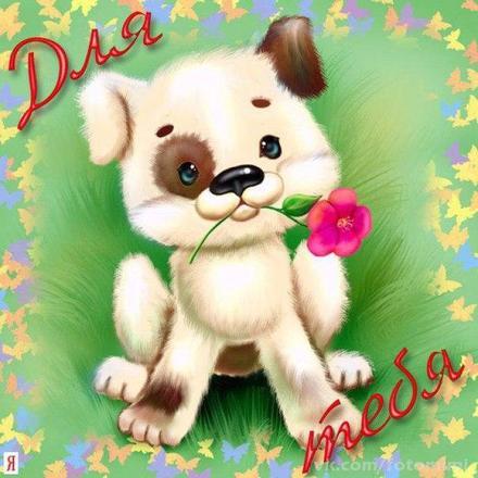 Открытка для Тебя, цветок и щенок, картинка Тебе, просто так, от всей души, для Тебя! скачать открытку бесплатно   123ot