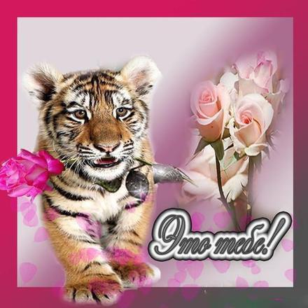 Открытка для Тебя, картинка Тебе, тигр, просто так, от всей души, для Тебя! скачать открытку бесплатно | 123ot