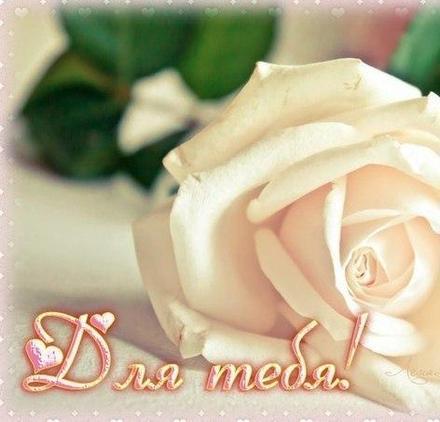Открытка для Тебя, картинка Тебе, просто так, белая роза, от всей души, для Тебя! скачать открытку бесплатно   123ot