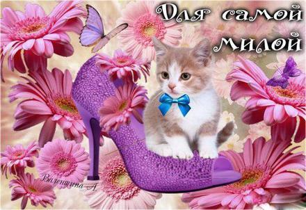 Открытка для Тебя, картинка Тебе, кот в туфле, просто так, от всей души, для Тебя! скачать открытку бесплатно   123ot