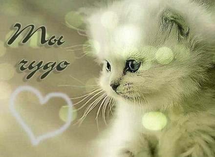 Открытка Ты чудо, нежность для Тебя, котик, картинка Тебе, просто так, от всей души, для Тебя! скачать открытку бесплатно | 123ot