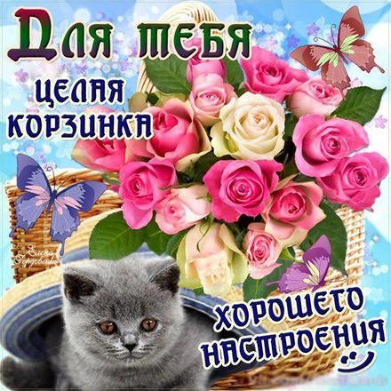 Открытка для Тебя, картинка Тебе, розы, котик, просто так, от всей души, для Тебя! скачать открытку бесплатно   123ot