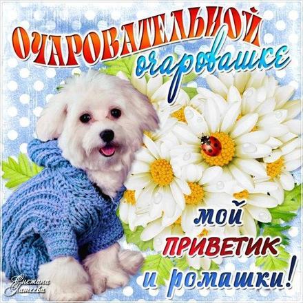 Открытка для Тебя, очаровательной, милой, красивой, картинка Тебе, просто так, от всей души, для Тебя! скачать открытку бесплатно   123ot