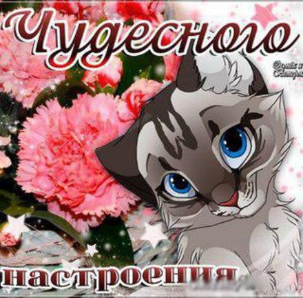 Открытка улыбнись, улыбайся, для Тебя, где твоя улыбка! Милый котик! Котенок! скачать открытку бесплатно | 123ot