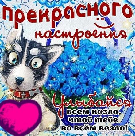 Открытка улыбнись, улыбайся, для Тебя, где твоя улыбка! Прекрасного настроения! Синие розы! Голубые розы! Собачка! скачать открытку бесплатно | 123ot
